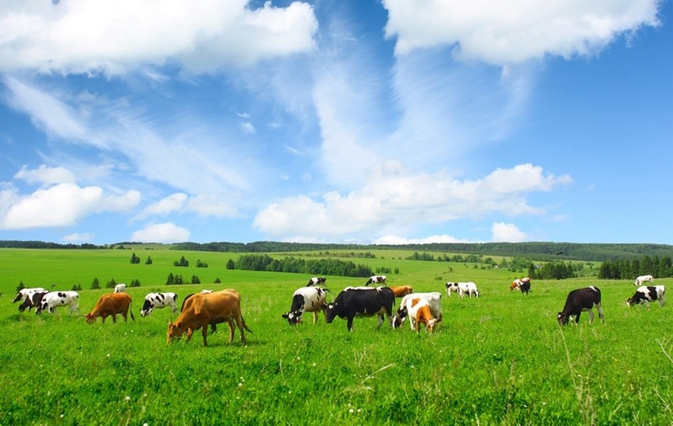 Truly Grass Fed trends Dairy Products and Ingredients
